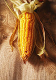 Grilled sweet corn on the cob. Farm fresh seasonal autumn grilled sweet corn on the cob viewed overhead centered on a wooden background in vertical orientation Stock Images