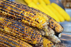 Grilled sweet corn ready to be eaten Stock Photo