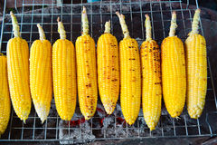 Grilled sweet corn Royalty Free Stock Image