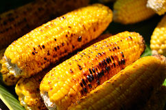Grilled sweet corn on Street Market Stock Photography