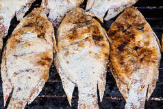 Grilled Tilapia fish Royalty Free Stock Images