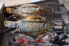 Grilled tilapia fish salted on stove Royalty Free Stock Photos