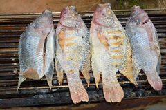 Grilled tilapia fishes Stock Photography
