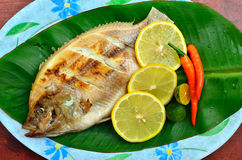 Grilled Tilapia with lemon and chili on banana leaves Royalty Free Stock Photography