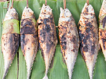 Grilled torpedo scad fish - Thai food Royalty Free Stock Image