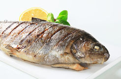 Grilled trout Stock Photography