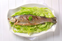 Grilled trout Stock Image