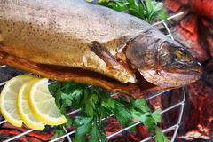 Grilled Trout Royalty Free Stock Photo