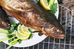 Grilled Trout Royalty Free Stock Image