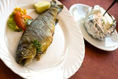 Grilled trout with cream potato Royalty Free Stock Photos