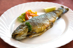 Grilled trout with cream potato stock photos