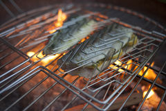 Grilled trout with fire in the background Stock Images