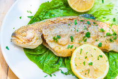 Grilled trout served on a plate Royalty Free Stock Photography
