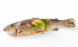 Grilled trout. Studio shot of grilled trout stock photo