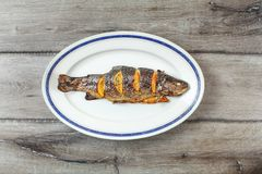 Grilled trout on white oval plate with blue rim Royalty Free Stock Photos