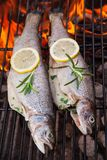 Grilled trouts Royalty Free Stock Photography