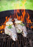 Grilled trouts Stock Image