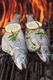 Grilled trouts Royalty Free Stock Images