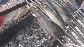 Grilled trouts fish stock video