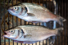 Grilled whole fresh bass Stock Images