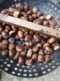 Grilled wild chestnut. On the garden Autumn Royalty Free Stock Photo