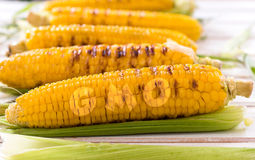 Grilled young corns gmo sign Stock Photo