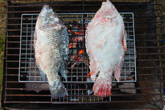 Griller des poissons avec du sel Photographie stock