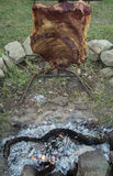 grillfester Royaltyfri Fotografi