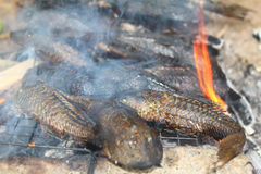 Grilling fish on barbecue Royalty Free Stock Image
