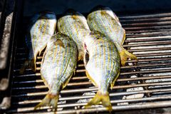 Grilling fish on a bbq barbecue grill over hot coal. Preparing and roasting Salema porgy, Sarpa salpa or sea bream fish on a barbecue in a bbq fireplace in stock images