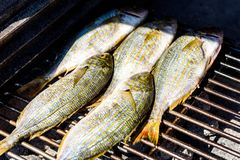 Grilling fish on a bbq barbecue grill over hot coal. Preparing and roasting Salema porgy, Sarpa salpa or sea bream fish on a barbecue in a bbq fireplace in royalty free stock images
