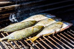 Grilling fish on a bbq barbecue grill over hot coal. Preparing and roasting Salema porgy, Sarpa salpa or sea bream fish on a barbecue in a bbq fireplace in stock image