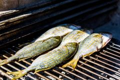 Grilling fish on a bbq barbecue grill over hot coal. Preparing and roasting Salema porgy, Sarpa salpa or sea bream fish on a barbecue in a bbq fireplace in royalty free stock photos