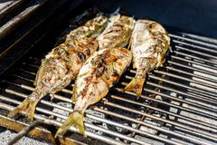 Grilling fish on a bbq barbecue grill over hot coal. Preparing and roasting Salema porgy, Sarpa salpa or sea bream fish on a barbecue in a bbq fireplace in royalty free stock image