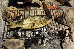 Grilling fish on the beach. A fish is grilling on the beach Royalty Free Stock Photo