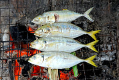 Grilling fish on campfire Royalty Free Stock Photography