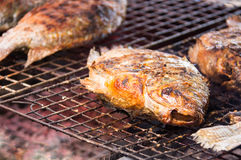 Grilling fish on campfire in market, royalty free stock photo