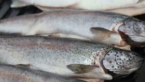 Grilling trout fish on barbecue - close-up view. Grilling fresh trout fish on barbecue - close up view stock footage