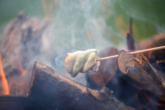 Grilling marshmallows on fire. Grilling marshmallows on stick. Fire, family fun Stock Photos