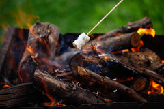 Grilling marshmallows on fire Stock Images