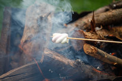 Grilling marshmallows on fire Royalty Free Stock Images