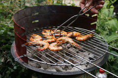 Grilling prawns on a barbecue Stock Images