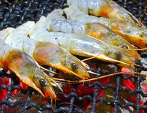 Grilling shrimp Stock Photos