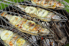 Grilling trout Royalty Free Stock Images