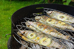 Grilling trout Stock Photos