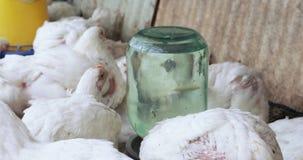 Grills in het vogelhuis stock footage