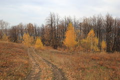 Grim autumn forest Stock Photography