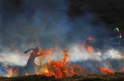 Grim reaper. A farm labourer fights a gorse fire on Mulfra hill, West Cornwall, the pose and perspective give a grim reaper look Stock Photos