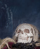 Grim Reaper Skull Stock Photography