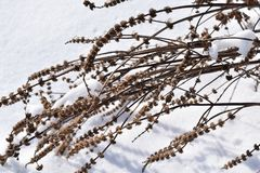 Grimmige dode installatie in de sneeuw Royalty-vrije Stock Fotografie
